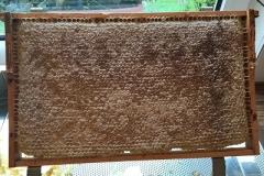 Honigwabe verdeckelt