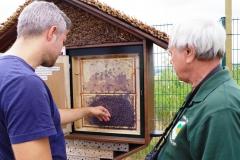 Bienen im Schaukasten  (Foto: Marina Radcke)